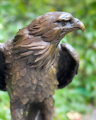Статуя орла из бронзы и мрамора BrokInCZ